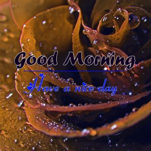 Beautiful Good Morning Images Pics Fre
