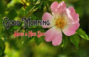 Beautiful Nature p Good Morning Images Pics Download