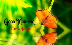 Best Flower Good Morning Photo Download