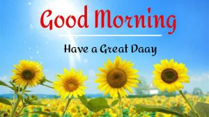 Best Good Morning Images photo download