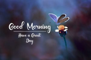 Best Good Morning Images photo free hd download