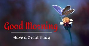 Best Good Morning Images pics free hd download