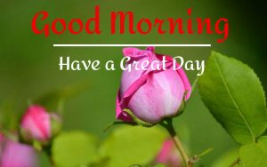 Best Good Morning Images pics hd download