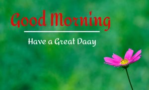 Best Good Morning Images pictures free hd download