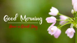 Best Good Morning Images pictures hd