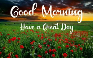 Best Good Morning Images pictures photo download free hd