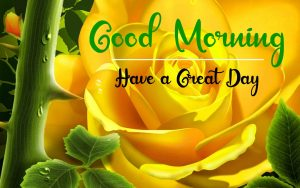 Best Good Morning Images wallpaper photo hd