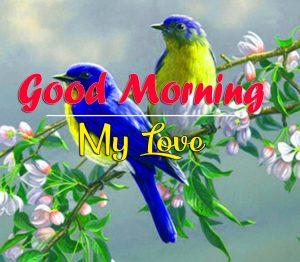Bird Good Morning Images Pics Download