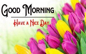 Flowe Free Good Morning Images