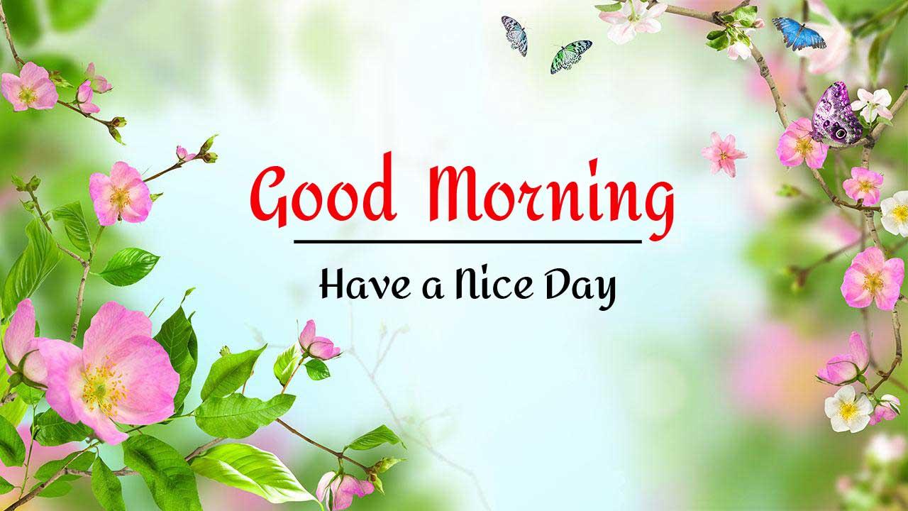 Flower Good Morning Images wallpaper free download