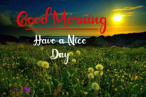Flower New Best Good Morning Images photo for download