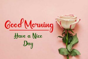 Flower New Best Good Morning Images photo free download