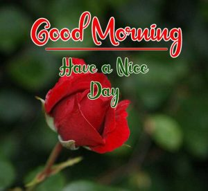 Flower New Best Good Morning Images photo hd