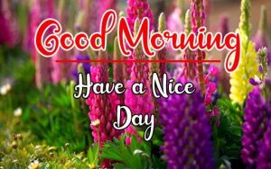 Flower New Best Good Morning Images photo pics for hd download