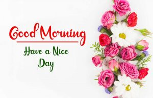Flower New Best Good Morning Images photo pics hd