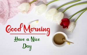 Flower New Best Good Morning Images photo wallpaper download