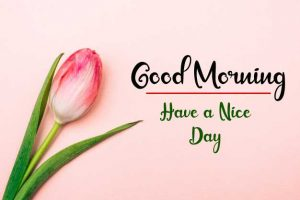 Flower New Best Good Morning Images pics for whatsapp