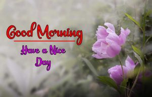 Flower New Best Good Morning Images pics pictures photo hd