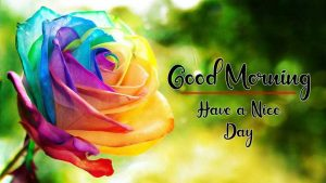 Flower New Best Good Morning Images pictures hd