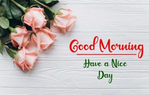 Flower New Best Good Morning Images pis free download