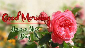 Flower New Best Good Morning Images wallpaper for download