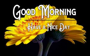 Free p Good Morning Pics Download