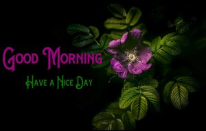 Free Black Background p Good Morning Images Pics Download