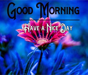 Free Good Morning Download