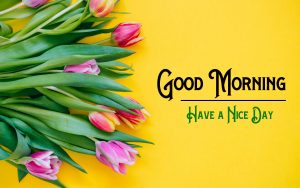 Free Good Morning Pics Images In Full HD