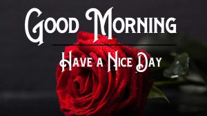 Free Good Morning Pictures Red Rose