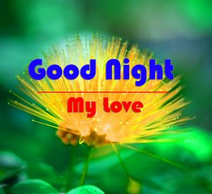 Free Good Night Wallpaper Images With Flower