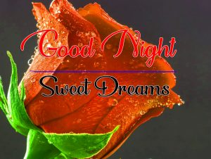 Free Good Night Wishes Wallpaper With Red Rose