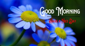 Free HD Good Morning Images Download
