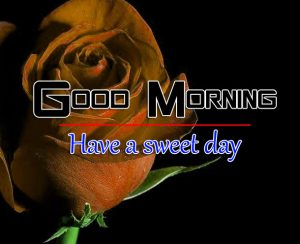 Free Latest Beautiful Romantic Good Morning Images Wallpaper Download