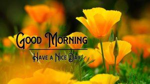 Free Latest Good Morning Wallpaper Download