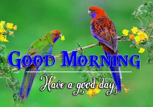Free Love Couple Good Morning Wishes Pics Download