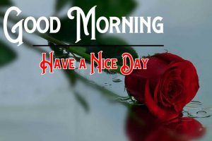 Free Red Rose Good Morning Pics Download