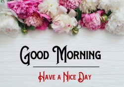 Free Rose p Good Morning Images Pics Download