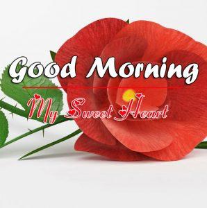 Free Rose Good Morning Images Pics Download