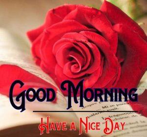 Free Rose Good Morning Pic Download
