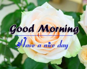 Free White Flower Good Morning Images Pics Download