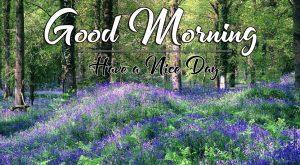 Full HD Nature p Good Morning Images Pics Download