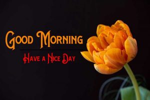 Full HD With Rose Good Morning Pics Download