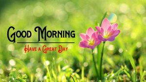 Good Morning Images With Flower HD