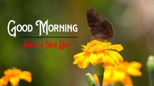 Good Morning Pics Download p