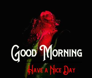 Good Morning Pics Download With Flower