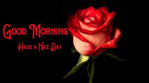 Good Morning Pics Pictures With Rose