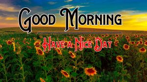 Good Morning Pics Wallpaper With Sunflower