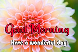 Good Morning Wishes Pics Free Good Morning Wishes