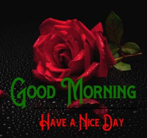 Have A Nice Day Good Morning Pics Download